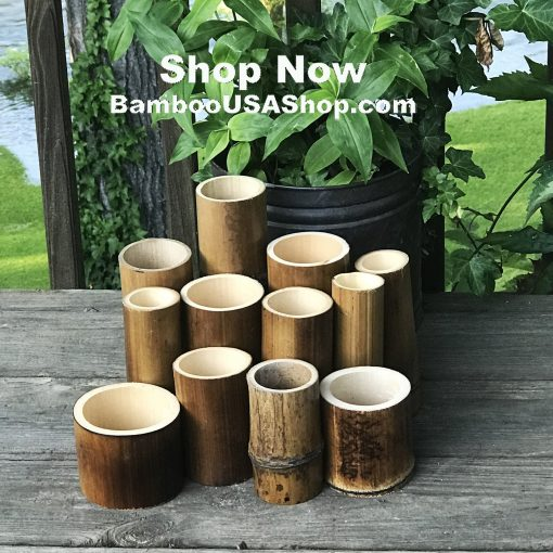 "Lot Of 12 Flamed Bamboo Poles Pieces   2-4"" Diam. X 4-10"" Length - Bamboousashop"