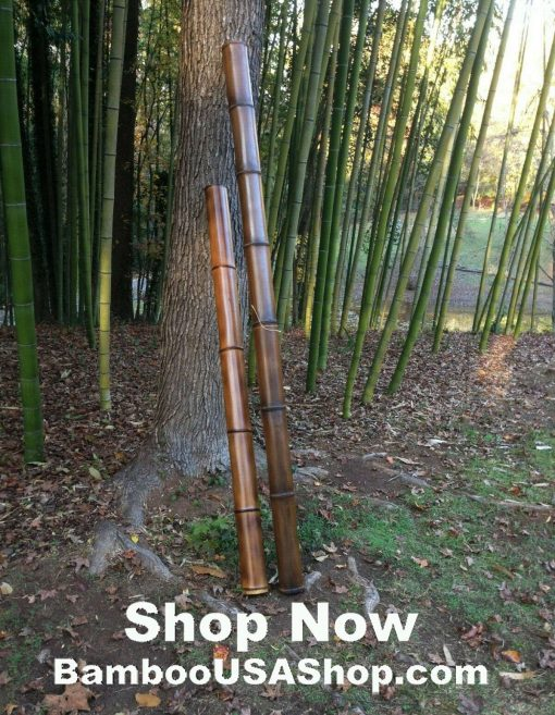 Bamboo Poles -Lot Of | 2 Giant Flamed | 4 Dia X 1'-7' Length - Bamboousashop